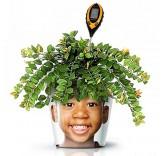 Прибор для ухода за растениями (влажность, кислотность, температура, освещенность)